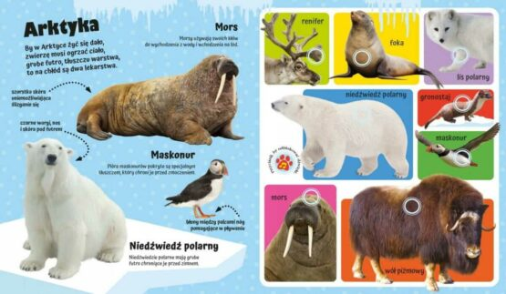 interaktywna książeczka z dźwiękami- odgłosy zwierząt AMW